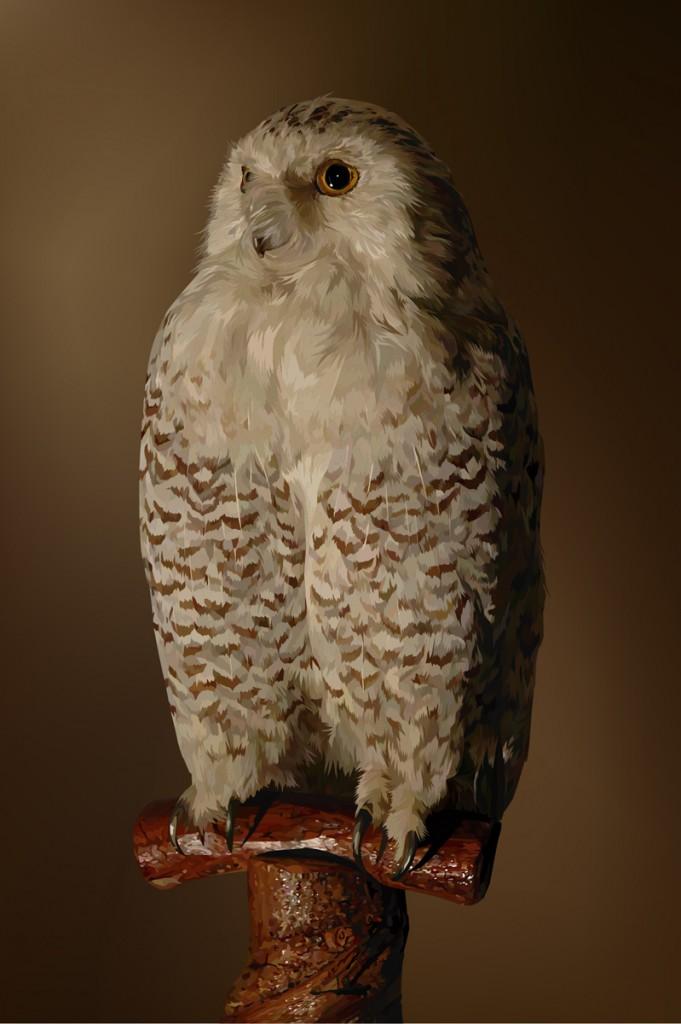 Still_Life_Owl