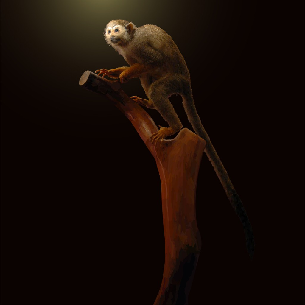 Still_Life_Squirrel_Monkey