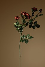 Still_Life_rose1