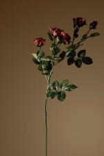 Still_Life_rose1