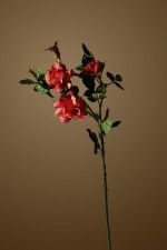 Still_Life_rose2