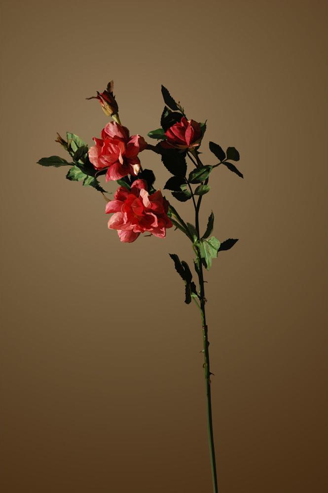 Still_Life_rose2