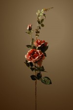 Still_Life_rose3