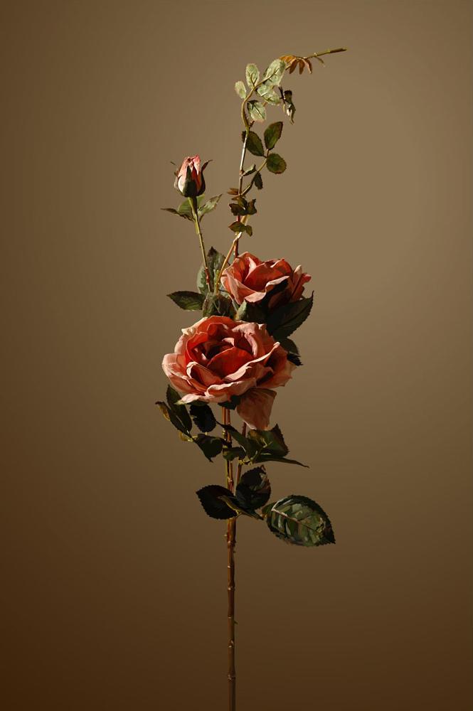 Still_Life_rose3